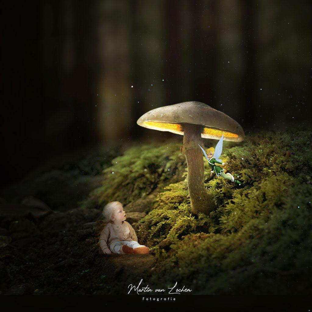 Beer onder de paddenstoel